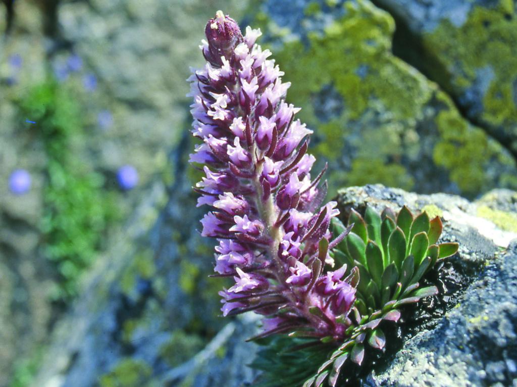 Archivio Parco Naturale Alpi Marittime